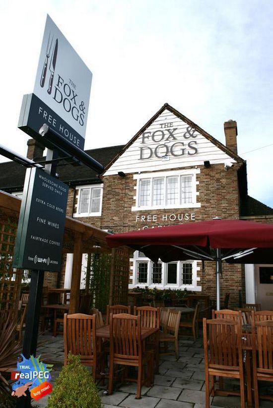 Fox & Dogs